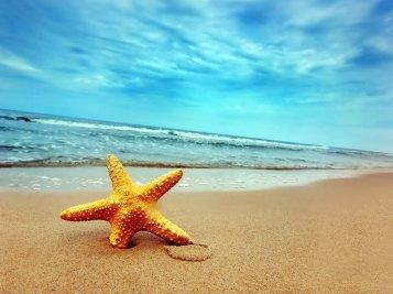 estrela_mar_praia